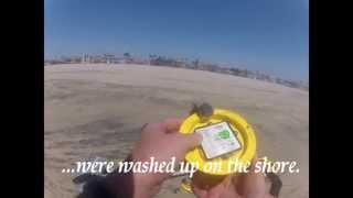 Windy Beach Hunt